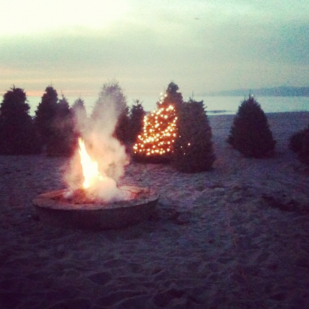 1-14 tree bonfire