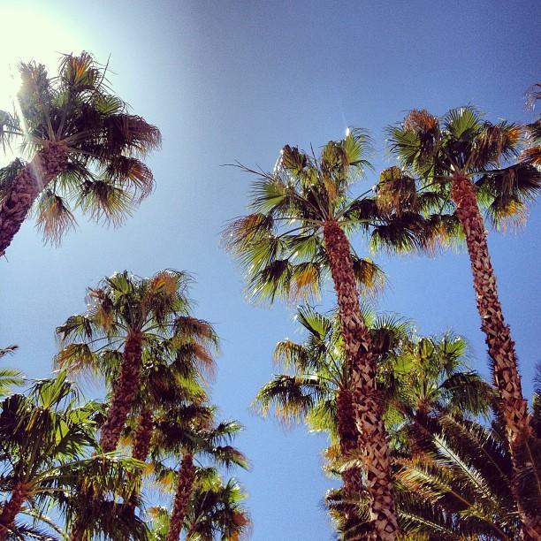 Garlic My Soul | Palm Trees in Vegas