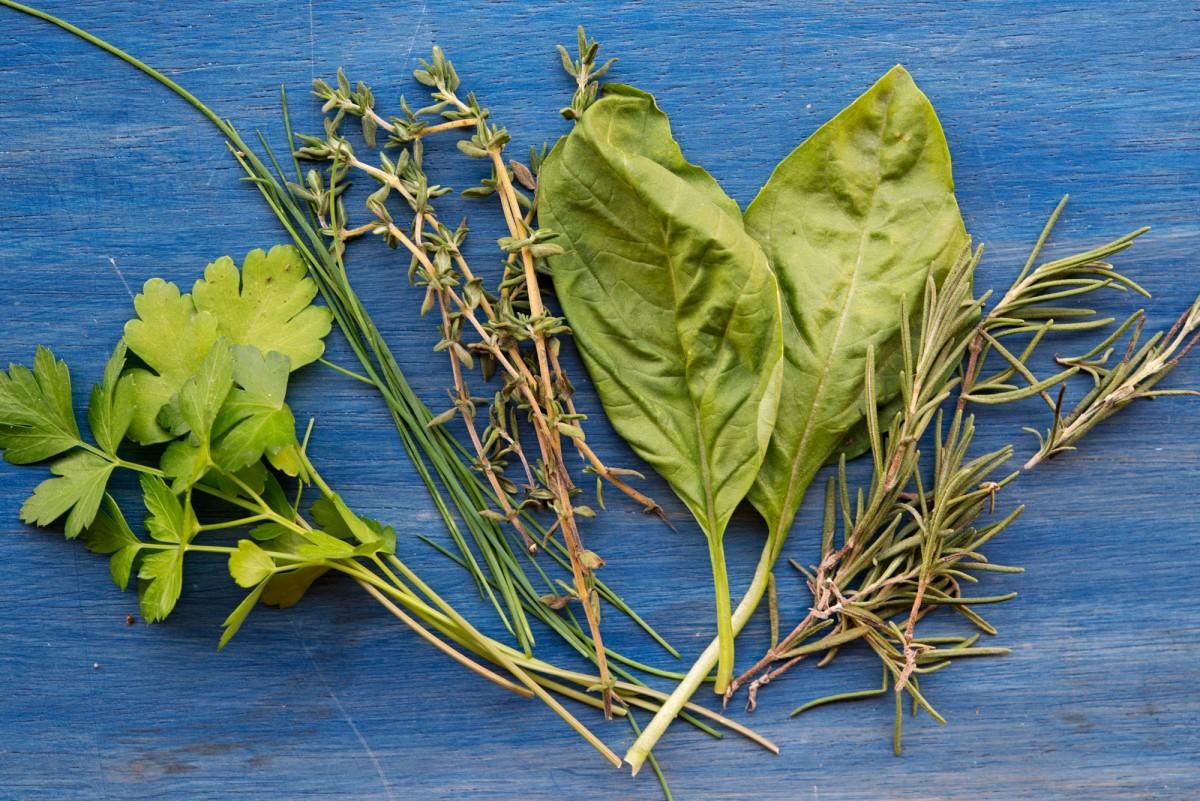 Earth Day Herbs | Garlic, My Soul